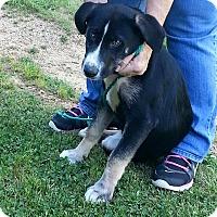 Adopt A Pet :: Maya - Lakeville, MN