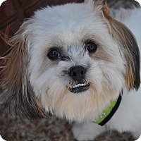 Adopt A Pet :: Mikey - Atlanta, GA