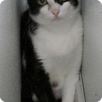 Adopt A Pet :: Queenie - Georgetown, TX