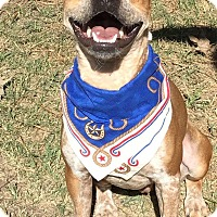 Adopt A Pet :: Bryson - Conroe, TX