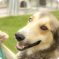 Adopt A Pet :: Chewy - Harvard, IL