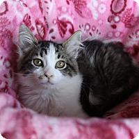 Adopt A Pet :: ELLEN - Newport Beach, CA