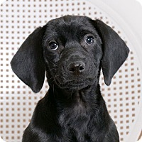 Adopt A Pet :: Freda - Sudbury, MA