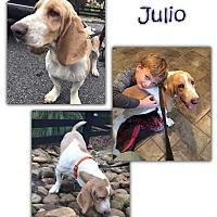Adopt A Pet :: Julio - Marietta, GA
