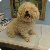 Adopt A Pet :: URGENT on 1/25 SAN BERNARDINO - San Bernardino, CA
