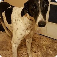 Adopt A Pet :: Bella - Morgan Hill, CA