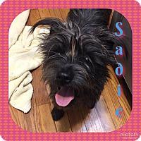 Adopt A Pet :: Sadie - Enid, OK