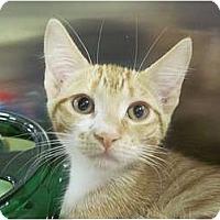 Adopt A Pet :: Nakei - The Colony, TX