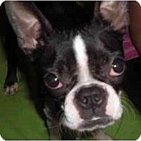 Adopt A Pet :: Orchid - Rigaud, QC