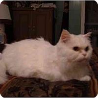 Adopt A Pet :: Norman - No.Charleston, SC