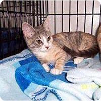 Adopt A Pet :: Penny - Island Park, NY