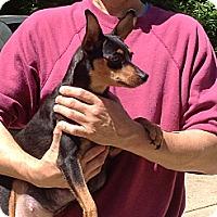Adopt A Pet :: Zoey - Washington, PA