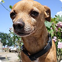 Adopt A Pet :: TRAPPER - Elk Grove, CA