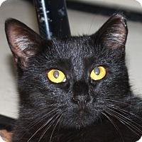 Adopt A Pet :: Miss Kitty - North Branford, CT