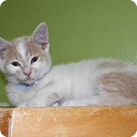 Adopt A Pet :: Romeo - Dover, OH