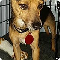 Adopt A Pet :: Danny - Detroit, MI