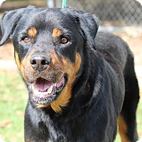 Adopt A Pet :: Bear - Alachua, GA