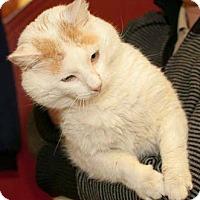 Adopt A Pet :: Johnny Smith - Merrifield, VA