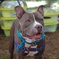 Adopt A Pet :: 'G' AKA Gus - MISSING, LOST, or STOLEN - Harriman, TN