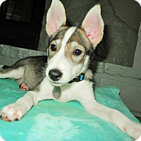 Adopt A Pet :: Aika - Homewood, AL