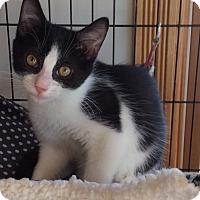 Adopt A Pet :: Mason - Acme, PA