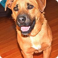 Adopt A Pet :: Rudy (RS) - Harrisonburg, VA