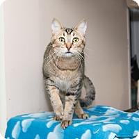 Adopt A Pet :: Superman - Chicago, IL