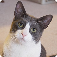 Adopt A Pet :: Mars - Colorado Springs, CO