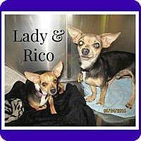 Adopt A Pet :: Rico - Shawnee Mission, KS