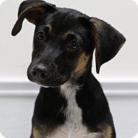 Adopt A Pet :: Dory - Groton, MA
