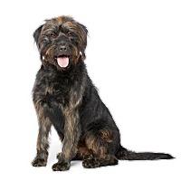 Adopt A Pet :: Aggie - Los Angeles, CA