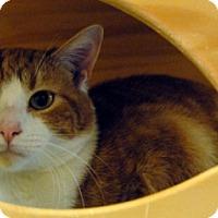 Adopt A Pet :: Mochi - Newland, NC
