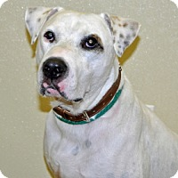 Adopt A Pet :: Petey - Port Washington, NY