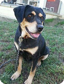 Rottweiler/Hound (Unknown Type) Mix Dog for adoption in Shinnston, West Virginia - Vu Ja De