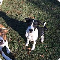 Adopt A Pet :: Holly - Hohenwald, TN