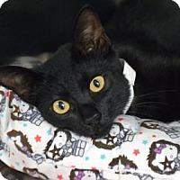 Adopt A Pet :: TJ - Bradenton, FL