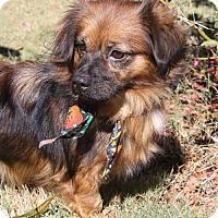 Adopt A Pet :: Maggs - Poughkeepsie, NY