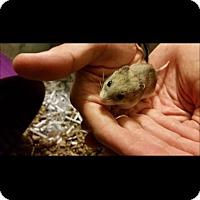 Adopt A Pet :: Cinderella - Bensalem, PA