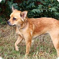 Adopt A Pet :: PRINCESS COCOA - Washington, DC