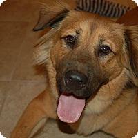 Adopt A Pet :: Simba - Ormond Beach, FL