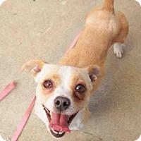 Adopt A Pet :: RONNIE - ID#A342568 - Petaluma, CA
