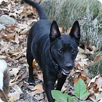 Adopt A Pet :: Wynn - Paso Robles, CA
