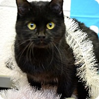 Adopt A Pet :: Cleopatra - Fort Riley, KS
