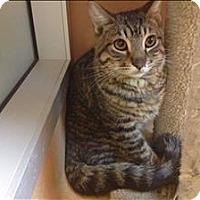 Adopt A Pet :: Logan - Mipiltas, CA
