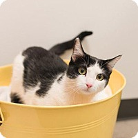 Adopt A Pet :: Oreo - Chaska, MN