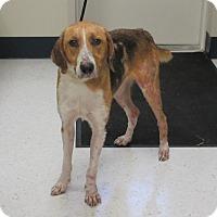 Adopt A Pet :: Lucky Mullen  SOS - Elizabeth City, NC