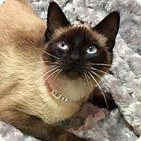 Adopt A Pet :: Leah - Pasadena, TX