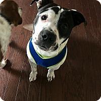 Adopt A Pet :: Klondike - Acworth, GA