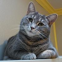 Adopt A Pet :: CICI - Dallas, TX