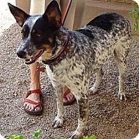 Adopt A Pet :: Mattie - Phoenix, AZ